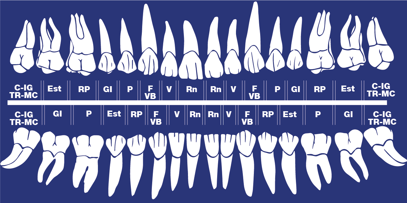 Schéma dents