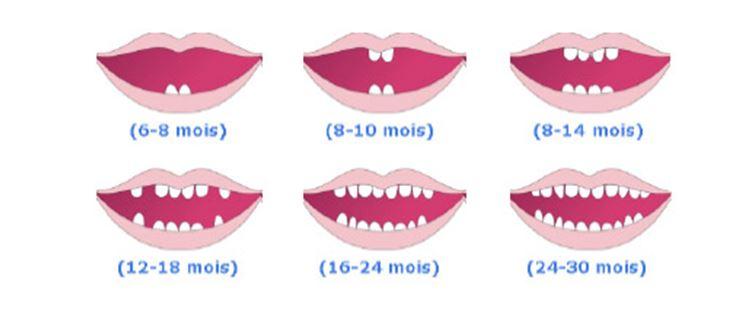 Relative Les dents de lait vous parlent   Energetique dentaire HJ07